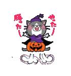 Hiroshima Cat 6 秋(個別スタンプ:24)
