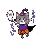 Hiroshima Cat 6 秋(個別スタンプ:27)