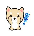 わんちゃん!!(個別スタンプ:13)