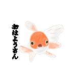 リアル金魚【京都弁】(個別スタンプ:1)