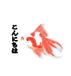 リアル金魚【京都弁】(個別スタンプ:2)