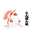 リアル金魚【京都弁】(個別スタンプ:3)