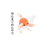 リアル金魚【京都弁】(個別スタンプ:13)