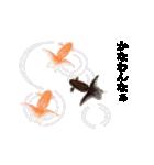 リアル金魚【京都弁】(個別スタンプ:17)
