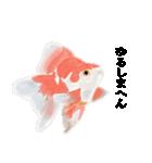 リアル金魚【京都弁】(個別スタンプ:19)