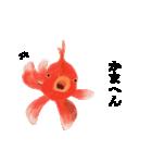 リアル金魚【京都弁】(個別スタンプ:20)
