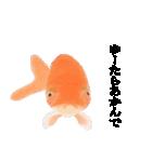 リアル金魚【京都弁】(個別スタンプ:21)