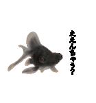 リアル金魚【京都弁】(個別スタンプ:26)