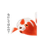 リアル金魚【京都弁】(個別スタンプ:30)