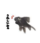 リアル金魚【京都弁】(個別スタンプ:35)