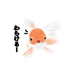 リアル金魚【京都弁】(個別スタンプ:37)