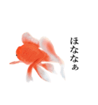 リアル金魚【京都弁】(個別スタンプ:39)