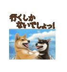 さすが!柴犬(気が利く言葉編)(個別スタンプ:07)