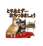 さすが!柴犬(気が利く言葉編)(個別スタンプ:11)