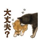 さすが!柴犬(気が利く言葉編)(個別スタンプ:14)