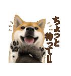 さすが!柴犬(気が利く言葉編)(個別スタンプ:19)