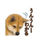 さすが!柴犬(気が利く言葉編)(個別スタンプ:23)