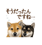 さすが!柴犬(気が利く言葉編)(個別スタンプ:24)