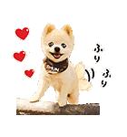 犬の俊介くん(個別スタンプ:01)