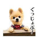 犬の俊介くん(個別スタンプ:03)
