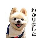 犬の俊介くん(個別スタンプ:04)