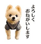 犬の俊介くん(個別スタンプ:07)