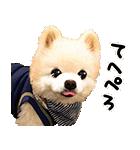 犬の俊介くん(個別スタンプ:09)