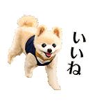 犬の俊介くん(個別スタンプ:10)