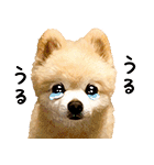 犬の俊介くん(個別スタンプ:11)