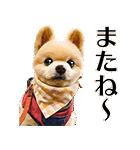 犬の俊介くん(個別スタンプ:12)