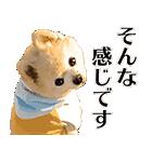 犬の俊介くん(個別スタンプ:13)