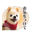 犬の俊介くん(個別スタンプ:15)