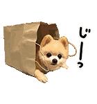犬の俊介くん(個別スタンプ:16)