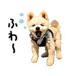犬の俊介くん(個別スタンプ:18)