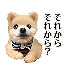 犬の俊介くん(個別スタンプ:19)