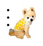 犬の俊介くん(個別スタンプ:20)