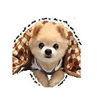 犬の俊介くん(個別スタンプ:21)