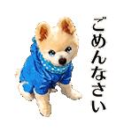 犬の俊介くん(個別スタンプ:22)