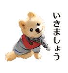 犬の俊介くん(個別スタンプ:23)