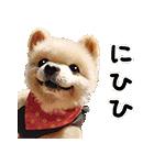 犬の俊介くん(個別スタンプ:24)