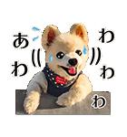 犬の俊介くん(個別スタンプ:25)