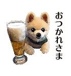 犬の俊介くん(個別スタンプ:26)