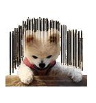 犬の俊介くん(個別スタンプ:27)