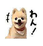 犬の俊介くん(個別スタンプ:28)