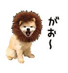 犬の俊介くん(個別スタンプ:29)