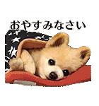 犬の俊介くん(個別スタンプ:30)