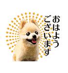 犬の俊介くん(個別スタンプ:31)