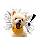 犬の俊介くん(個別スタンプ:33)