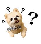 犬の俊介くん(個別スタンプ:34)