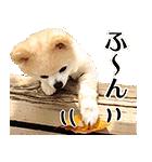 犬の俊介くん(個別スタンプ:35)